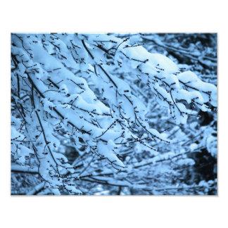 Snow Laden Branches Photo Print