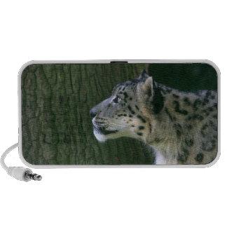 Snow leopard beautiful photo doodle speakers