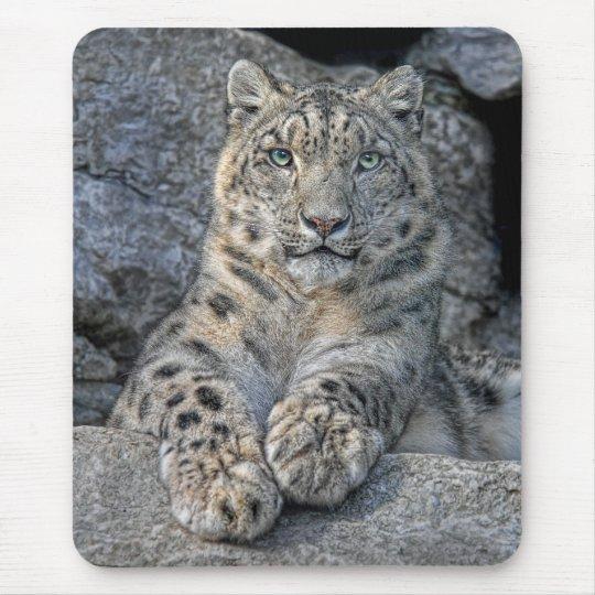 Snow Leopard Beauty Mousepad