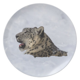Snow Leopard Buried in Snow Plate