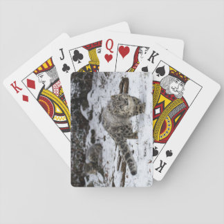 Snow Leopard Cub Stalking Birds Poker Deck