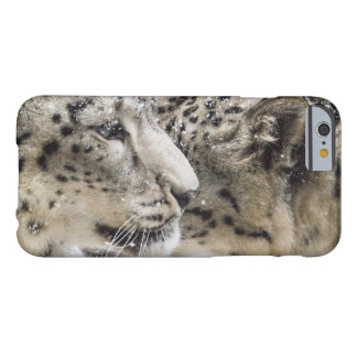 Snow Leopard Cuddle Barely There iPhone 6 Case