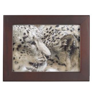 Snow Leopard Cuddle Keepsake Box