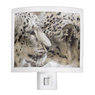 Snow Leopard Cuddle Night Light