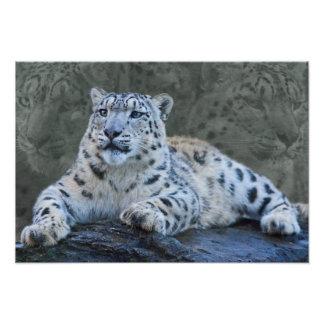 Snow Leopard Dreams Print Art Photo