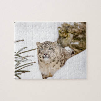 Snow Leopard in the Snow Jigsaw Puzzle