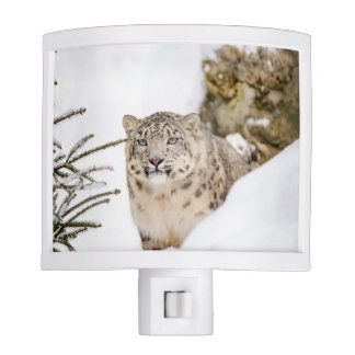 Snow Leopard in the Snow Night Lights