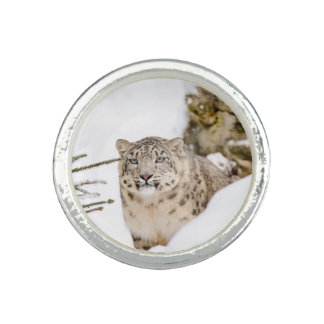 Snow Leopard in the Snow Photo Rings