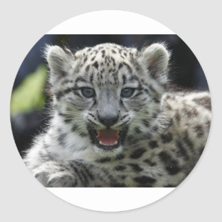 Snow Leopard Kitten Classic Round Sticker