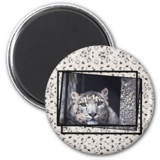 Snow Leopard Photo Magnet