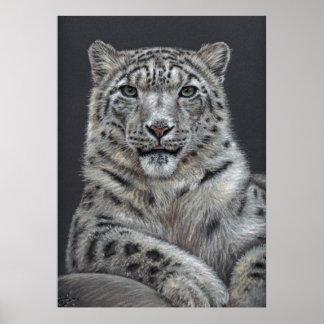 Snow leopard - Snow leopard Poster