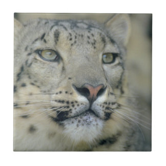 snow leopard tile
