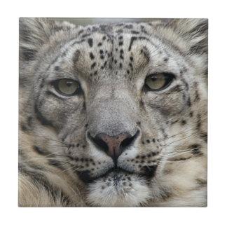 Snow Leopard Tile