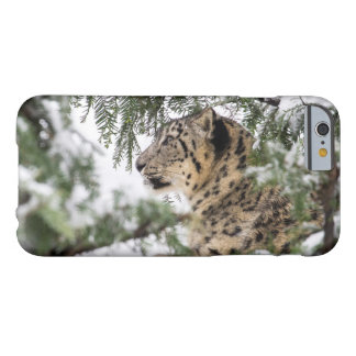 Snow Leopard under Snowy Bush Barely There iPhone 6 Case