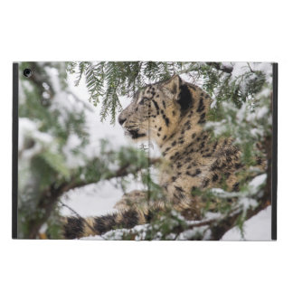 Snow Leopard Under Snowy Bush Cover For iPad Air