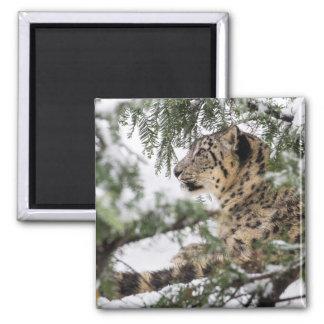 Snow Leopard Under Snowy Bush Magnet