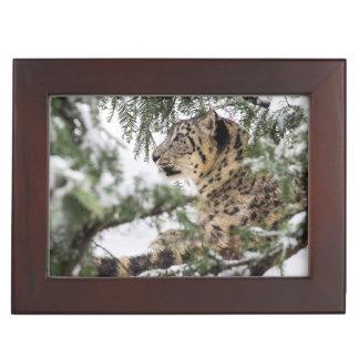 Snow Leopard Under Snowy Bush Memory Box