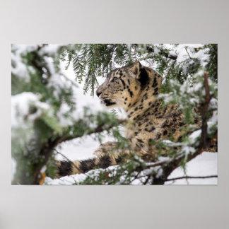 Snow Leopard Under Snowy Bush Poster