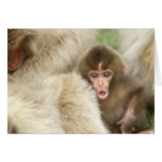 Snow Monkey Baby, Jigokudani, Nagano, Japan Card