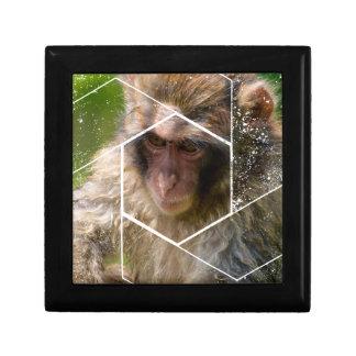 Snow Monkey Gift Box