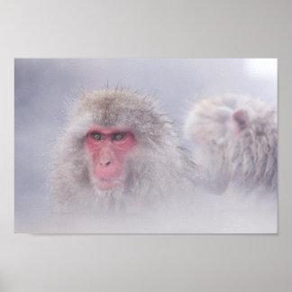Snow Monkey Japan Photo Poster