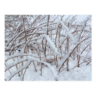 Snow on a Raspberry Patch --- Postcard
