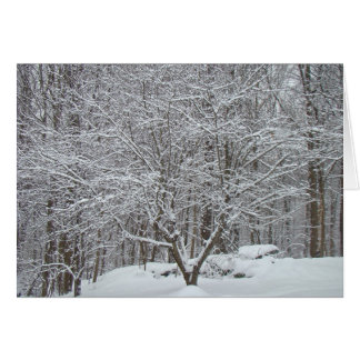 Snow on Dogwood Tree Quote Denis Waitley Card