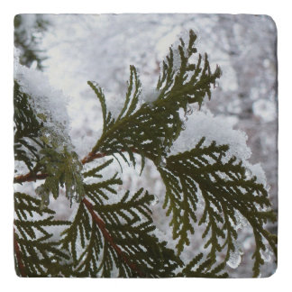 Snow on Evergreen Branches Winter Nature Photo Trivet