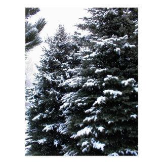 Snow On Firs Postcard