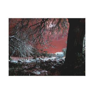 Snow on olive trees canvas print
