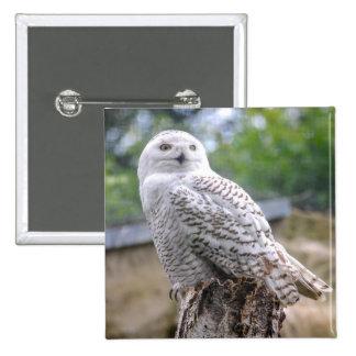 Snow owl 2 inch square button