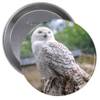 Snow owl 4 inch round button