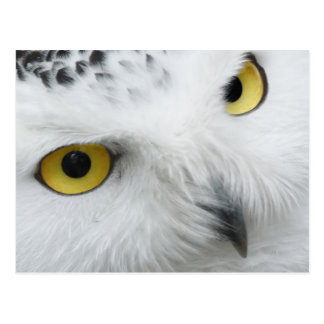 Snow Owl Post Card