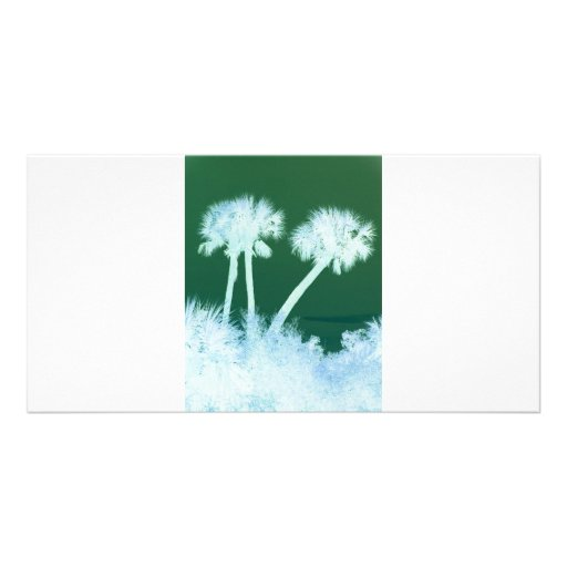 Snow Palms Picture Card
