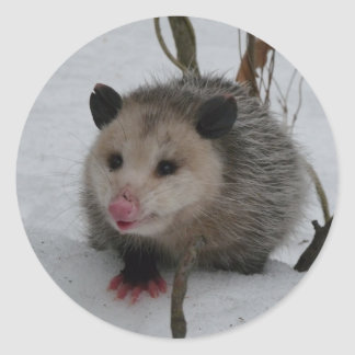 Snow Possum Classic Round Sticker