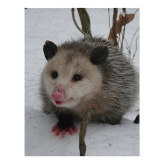 Snow Possum Letterhead