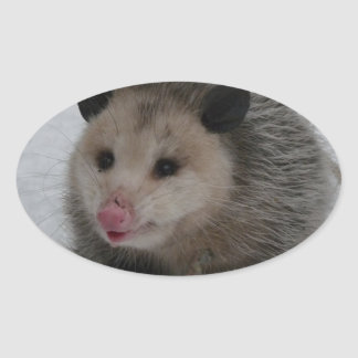 Snow Possum Oval Sticker