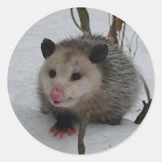 Snow Possum Round Sticker