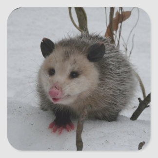 Snow Possum Square Sticker