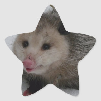 Snow Possum Star Sticker