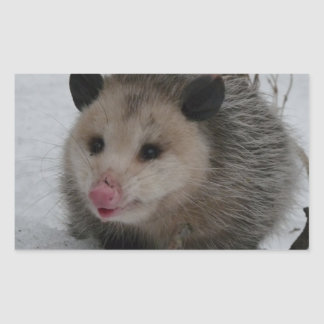 Snow Possum Sticker