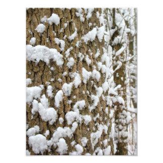 Snow Speckled Tree Photo Print