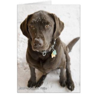 Snow Sprinkled Chocolate Lab Card