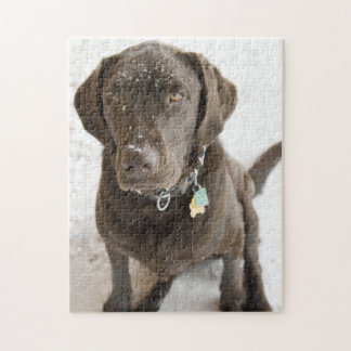 Snow Sprinkled Chocolate Lab Photograph Jigsaw Puzzle