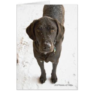 Snow Sprinkled Chocolate Labrador Photograph Greeting Card