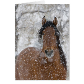 Snow Stallion Horse Greeting Card