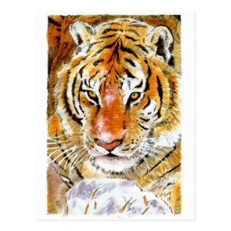 Snow Tiger Postcard