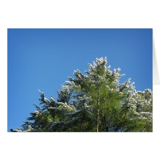 Snow-tipped Pine Tree on Blue Sky Card