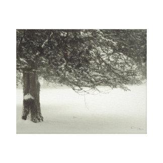 Snow Tree 2 Canvas Print