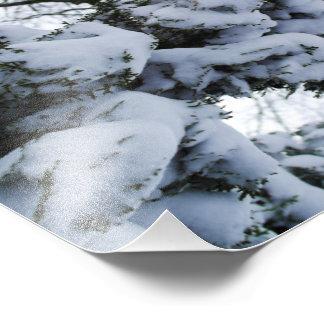 Snow Tree Photograph
